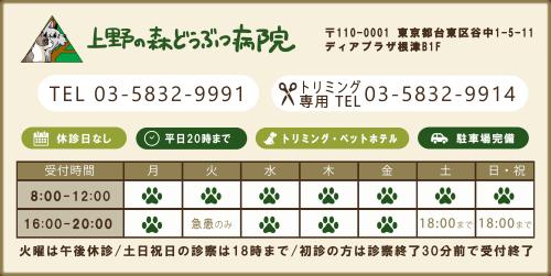 上野の森どうぶつ病院0358329991