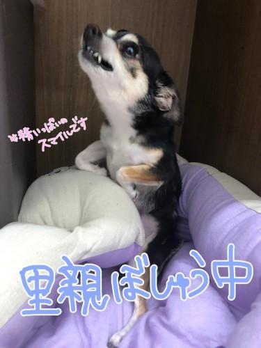 image0 (3)